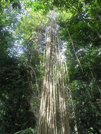 香波地群岛高清图片